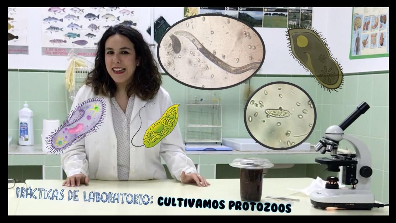 Los microorganismos que habitan en una gota de agua